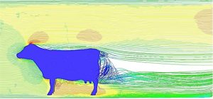 Image of a cow computed in fluid dynamics
